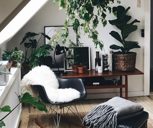 plants, home, and interior image