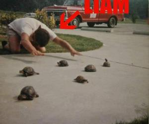 liam payne, turtle, and one direction image