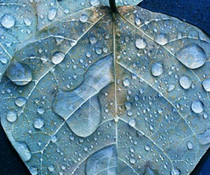 drops, leaves, and rain image