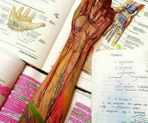 medicine, anatomy, and medicina image