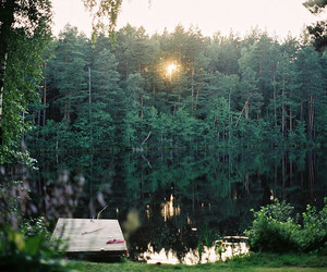 forest, lake, and analog image