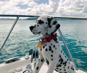adventure, chill, and dog image