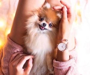 animal, dog, and fashion image