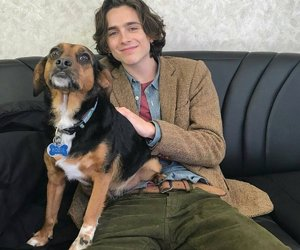 boy, dog, and timothee chalamet image