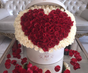 flowers, roses, and amazing image