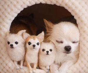 babies, chihuahuas, and mother image
