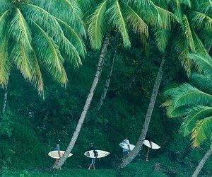 summer, surf, and palm trees image