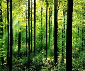 air, forest, and woods image