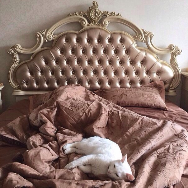 room, cat, and bed image