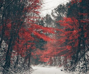 forest, free, and red image
