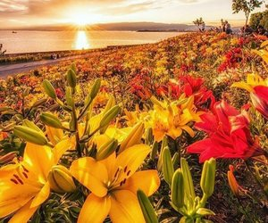 flowers, natural, and ocean image