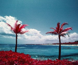 background, palm, and sea image