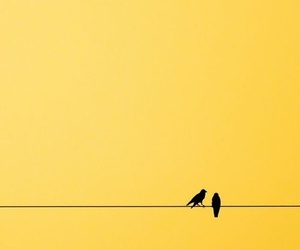 yellow and bird image