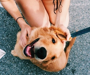 dog, animal, and blue image