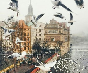 Flying, london, and seagull image
