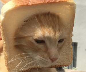 aesthetic, cat, and food image