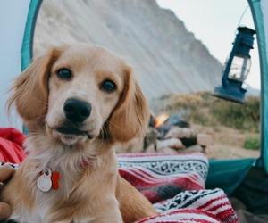 dog, adventure, and animal image