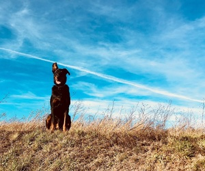 animals, chien, and sky image