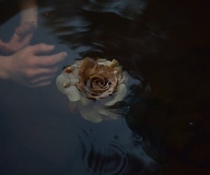 flowers, water, and dark image
