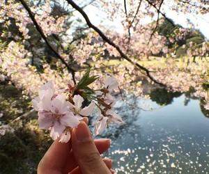 flowers, beautiful, and camera image