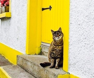 yellow, cat, and door image