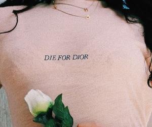 dior, fashion, and rose image