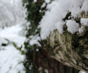 macro, snow, and macro photo image