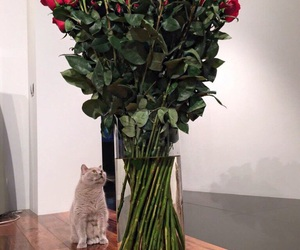 cat, flowers, and love image