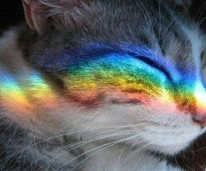 beautiful, rainbow, and cat image
