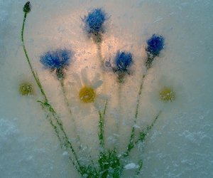 art, flowers, and nature image