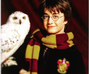 harry potter, daniel radcliffe, and owl image