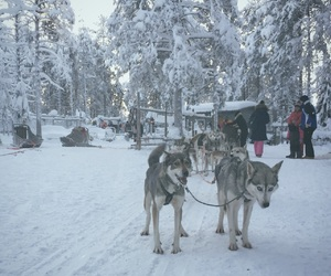 huskies, levi, and lapland image