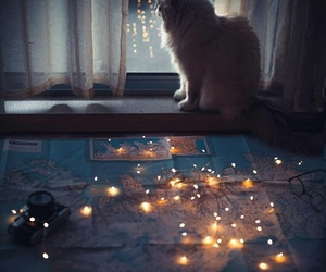 cat and light image