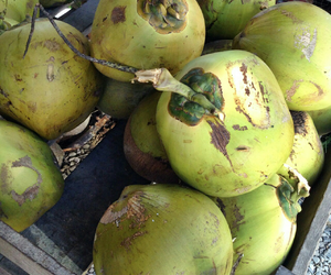 fruit and coconut image