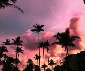 palms, sky, and summer image