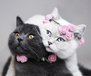 cat, love, and flowers image