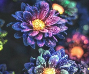 flowers and glow image