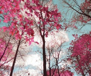 wallpaper, pink, and tree image
