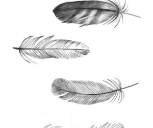 feather, drawing, and background image