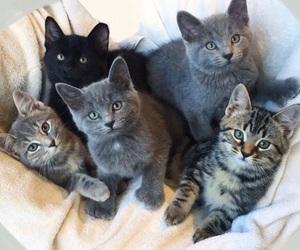 bestfriends, petlover, and grey + black + white image