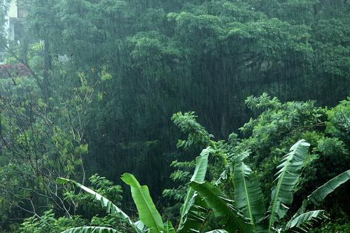 green, nature, and rain image