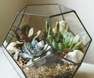 plants, terrarium, and succulent image