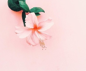article and hibiscus image