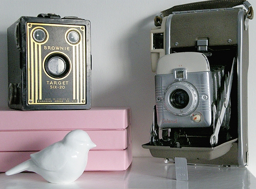 bird, vignette, and cameras image