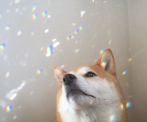 dog, aesthetic, and cute image