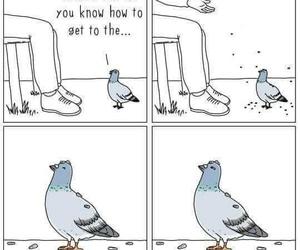 bird, disrespect, and birb image