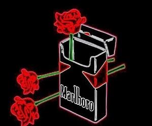 rose, marlboro, and red image