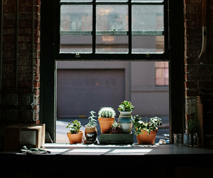 window, cactus, and plants image