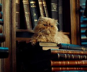 gif, cat, and book image