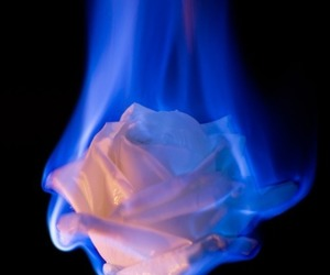 rose, aesthetic, and fire image